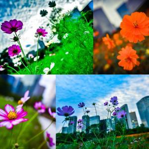 オアシスの花。
