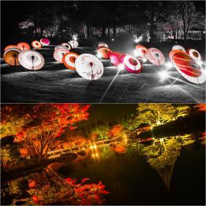 秋の夜散歩2020。