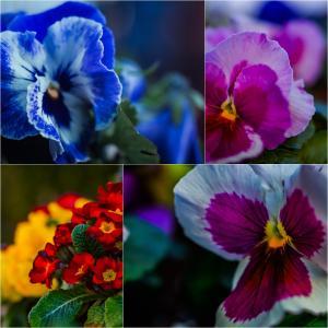 揺るがぬ愛の花。