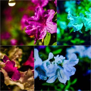 闇に咲く花。
