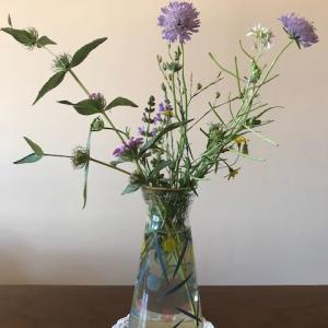 野花のスケッチ
