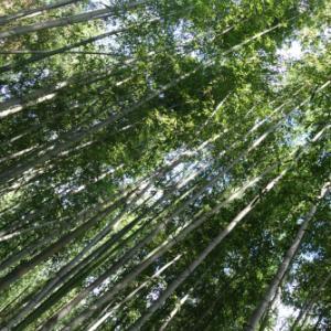**秋の京都day(2)**