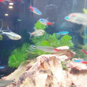 癒しの熱帯魚の巻