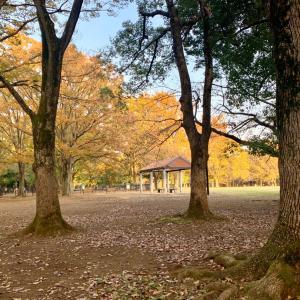 代々木公園ルナ散歩で新発見