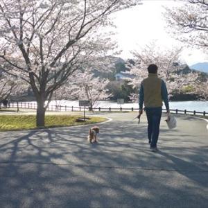 ★ロング散歩でお花見♪