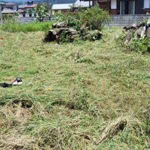 薪基地の草刈りと今後の戦略