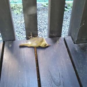 鳥が亡くなっていた