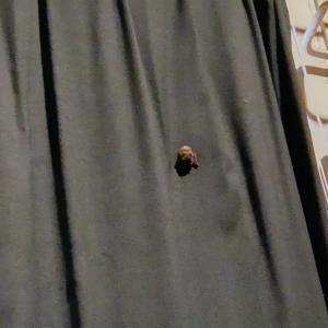 バドミントンの練習で、体育館にコウモリを発見