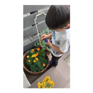 家庭菜園は無農薬で育てたい!アブラムシさん、こないでね~♡