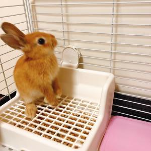 ウサギ、飼い始めました!