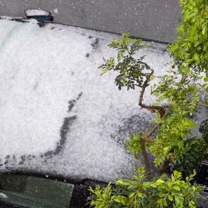 この時期に何十年ぶり!?雪の東京。