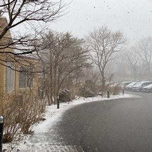 雪、すごいんですけど・・・