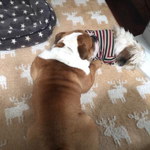 犬ター試験の行方は…(*´ο`*)