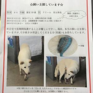 大阪府高槻市で迷子犬保護されています