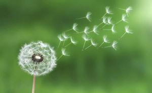 植物を再生させる魔法は愛