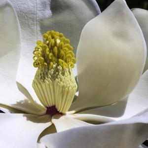 白い花に秘められた証