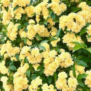 チャクラ調整 美しく麗しく瑞々しく花満開