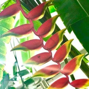 植物一体 ライトワーク遂行