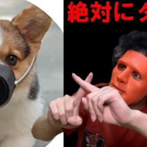 【衝撃】コロナ対策で「犬用マスク」が販売中…!?