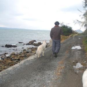 犬は散歩や運動をさせなくても死にやしない。