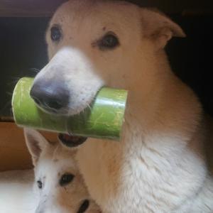 愛犬の体調が悪くなる前に気づくこと。