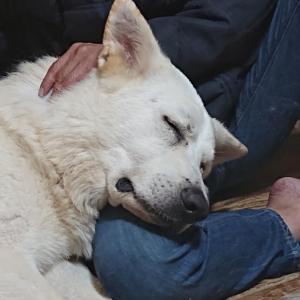 愛犬が安心を感じる飼い主になるためには。
