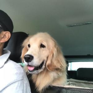 犬連れ観戦 日本GP Moto GP 2019🏁 フリー走行