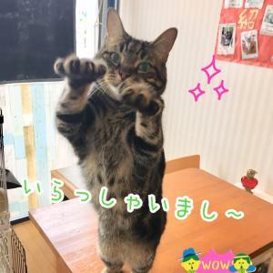 9月26日招き猫