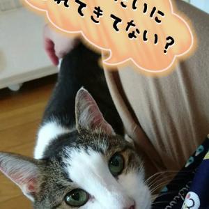 9月28日  今日は穏やかな猫達