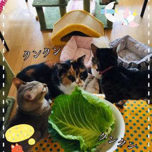 1月25日 食べたい食べたい!!!