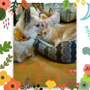 2月16日 猫カフェなのにチワワが人気?
