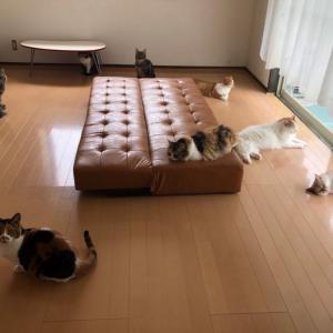 猫スタッフの日常