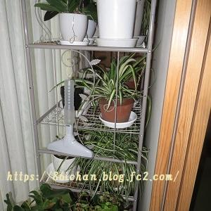観葉植物等の屋内設置のメリット、デメリットとその対策