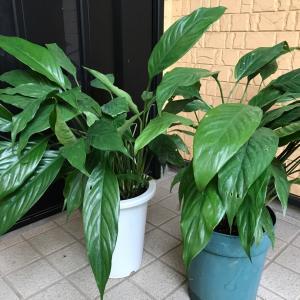 植物と対話する♪