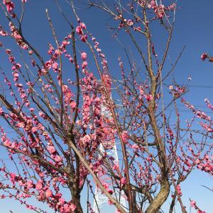 希望の春の訪れ・・!?