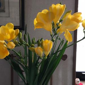 春の花は黄色から〜♪