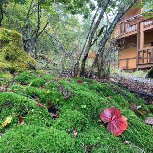 雨の蓼科 山小屋でシットリ
