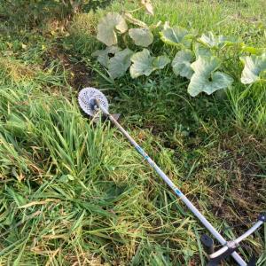 草に埋もれていた植物たち