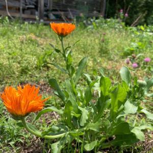 庭の植物、今年の一輪目たち