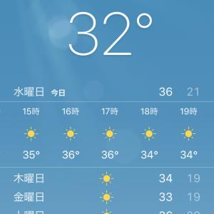 猛暑の予感