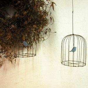 青い鳥のいる鳥かご