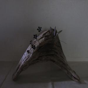 流木に着生するラン