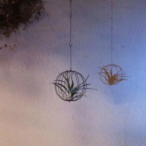 亀甲編みワイヤーボール+エアプランツ