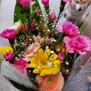 茶々にお花を貰ったよ♡