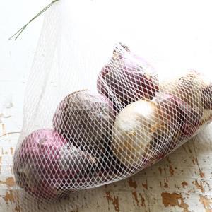 今年は早めにヒヤシンスの球根を買いました
