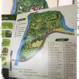 スリランカの古都、キャンディのペラデニア植物園(ボタニカルガーデン)で木を探す。