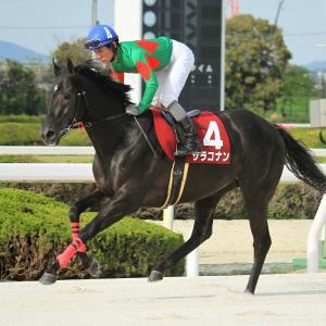第22回 兵庫チャンピオンシップ出走馬