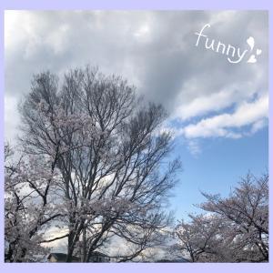 今日もちょっぴり桜♪