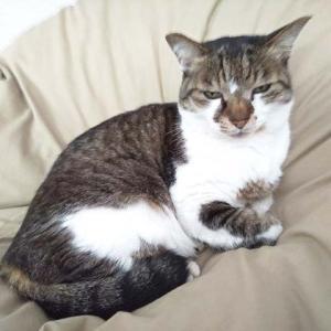 たまにはネコの写真など載せてみる…。