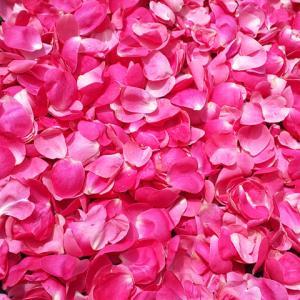 ローズティー、薔薇のハーブティーももうすぐ完成…ハーブ畑より。